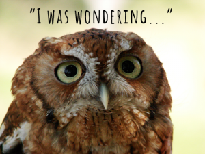 wondering owl