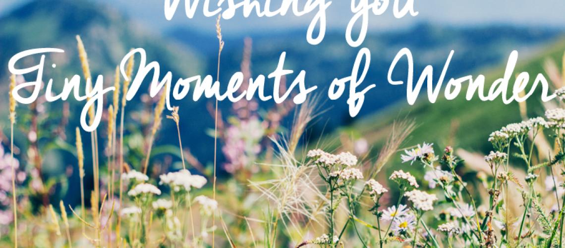 Tiny moments of wonder copy